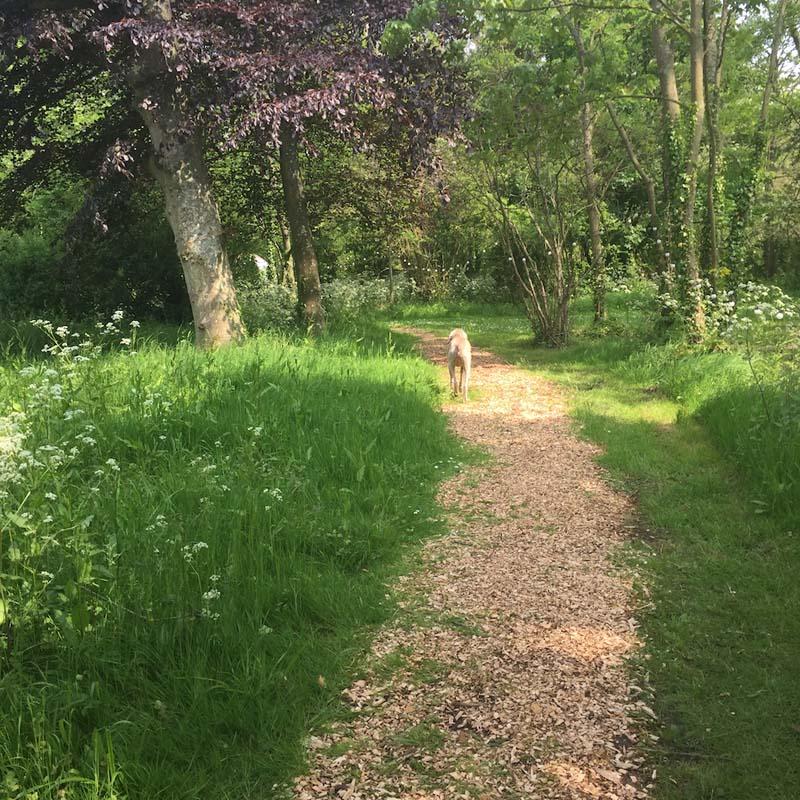 gentle yoga retreat uk path to yurt