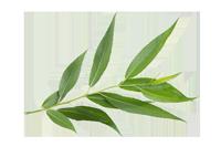 holistic-yoga-online-horse-willow-leaf