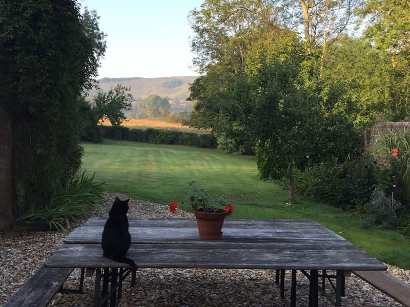 gentle restorative yoga retreat cat